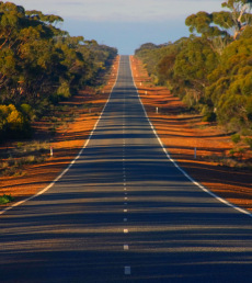 View down eucalyptus gum tree lined Coolgardie Esperance Highway in bushland south of Norseman Western Australia